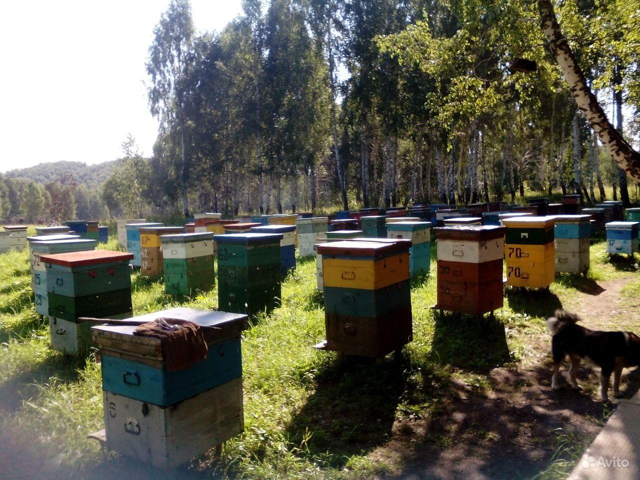 Продам мёд с собственной пасики. Алтайский край,  Барнаул