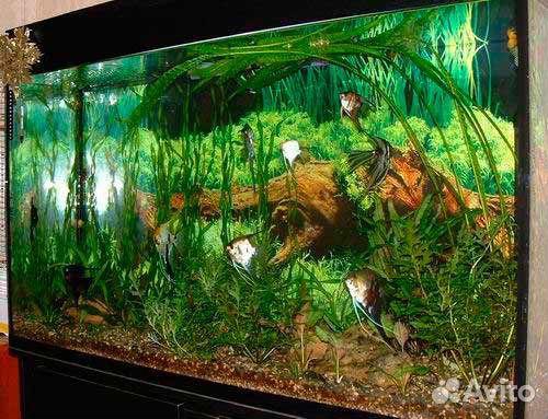 Фото аквариум своими руками