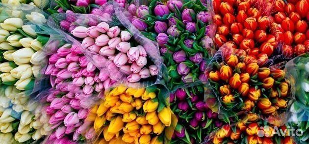 тюльпаны оптом и в розницу купить в спб новость для