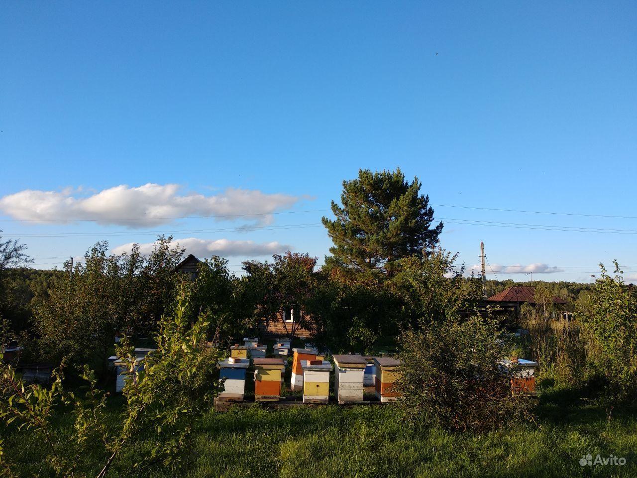 Продаю пчел/пчелосемьи карника