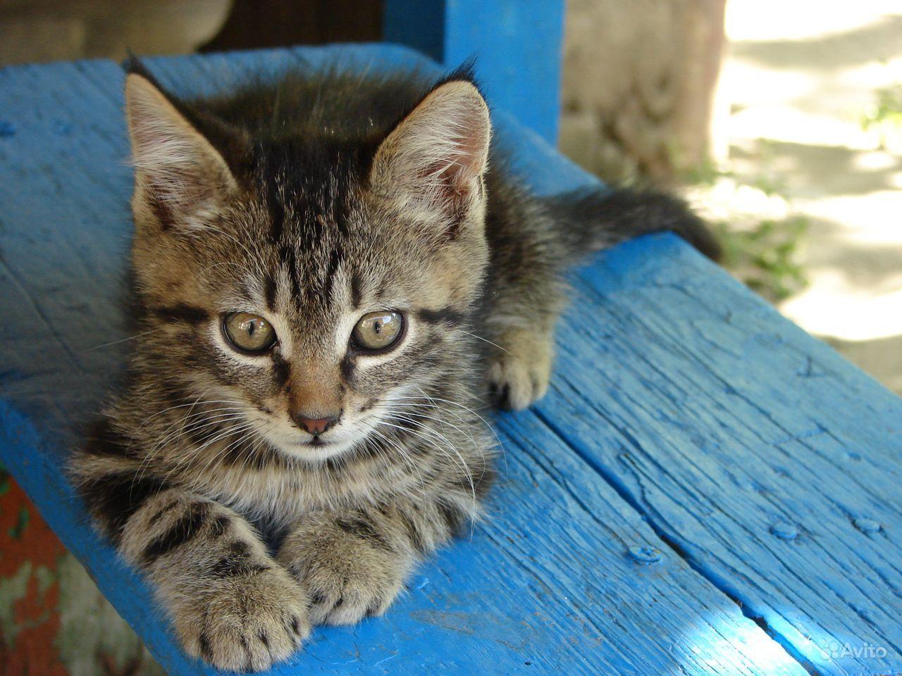 Подарю котиков