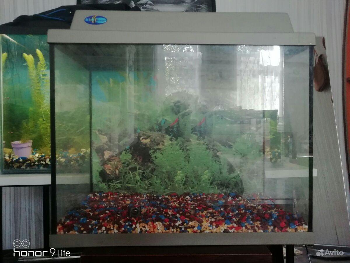 Аквариум на 50 литров