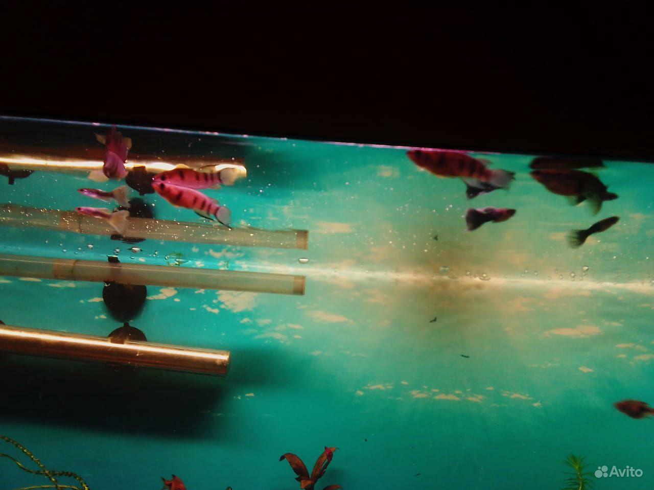 3 аквариума купить на Зозу.ру - фотография № 9
