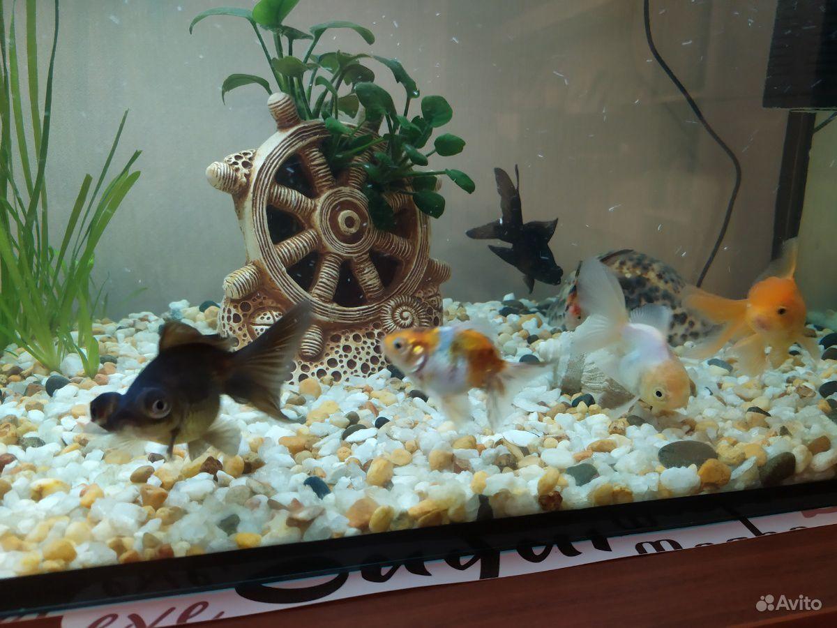 Рыбки купить на Зозу.ру - фотография № 4