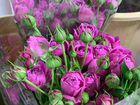 Тюльпаны объявление продам