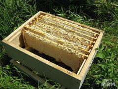 Сушь, ульи, медогонку, фляги,пчелосемьи