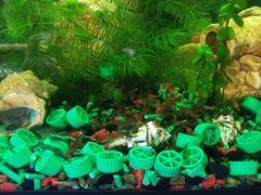 Неокордина прозрачная аквариумная декоративная