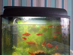 Продам аквариум 45л в хорошем состоянии