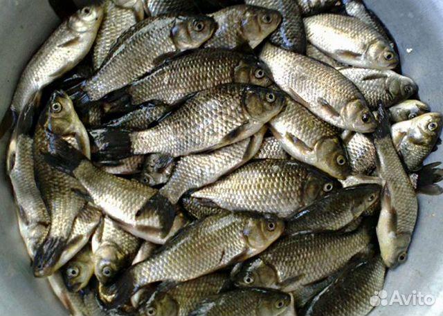 рыбалка в саратовской области маркс