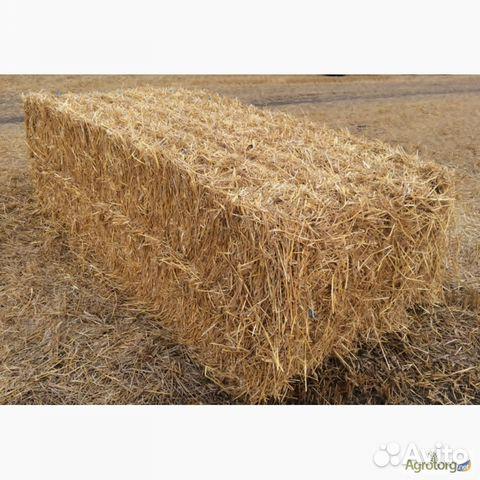 Солома пшеничная 89023561128 купить 1