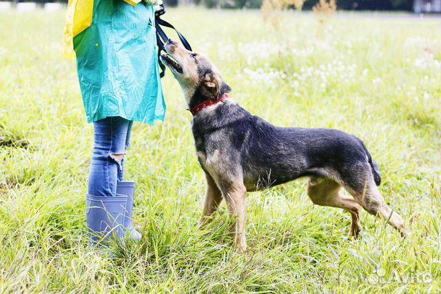 Отдам в добрые руки собаку Стенли купить на Зозу.ру - фотография № 5