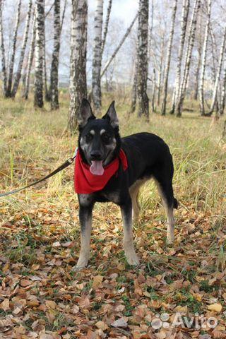 Собака Макс в дар купить на Зозу.ру - фотография № 3