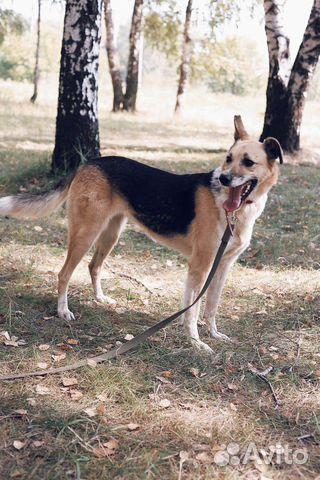 Молодая и добрая собака в дар купить на Зозу.ру - фотография № 5
