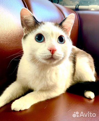 89137249811 Голубоглазый котик Лунтик