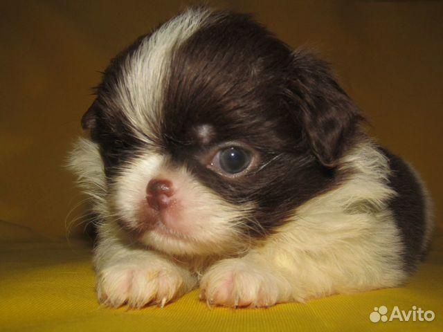 Puppies 89040704100 buy 4