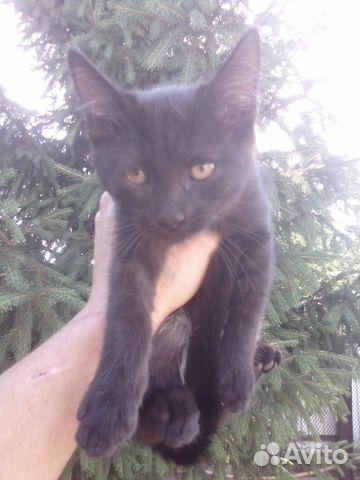 Котенок девочка  89397109841 купить 1