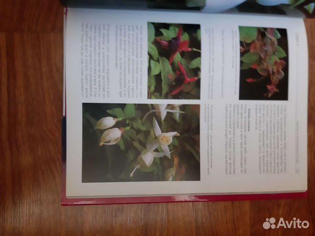 Энциклопедия цветов Фуксии  89044003557 купить 7