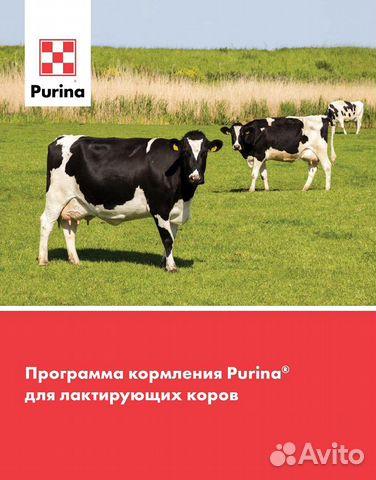 Пуринабвмд для лактирующих коров  89782699577 купить 2