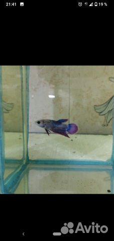 Аквариумные рыбки  89603595956 купить 5