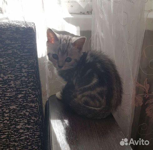 Кошка  89277279465 купить 5