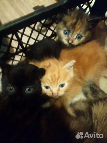 Кошка  89091702755 купить 2