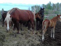 Лошадь с жеребенком