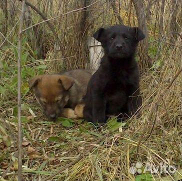 Красивые щенки ищут любящие семьи  89135639765 купить 5