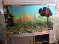 Панорамный аквариум jebo