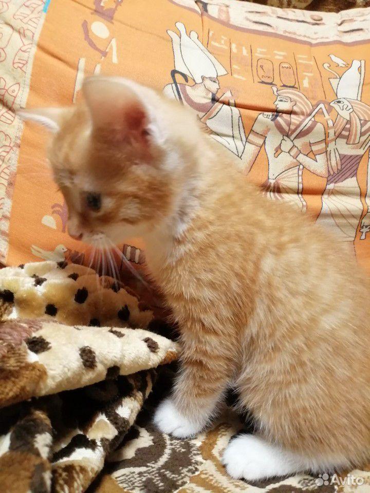 Котенок(кот)  89040015219 купить 4