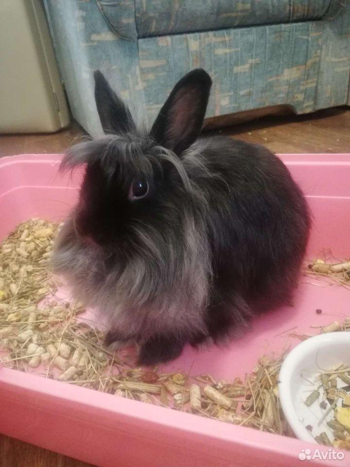 Кролик декоративный  89232499255 купить 4