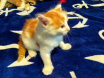 4 Золотых котенка в добрые руки