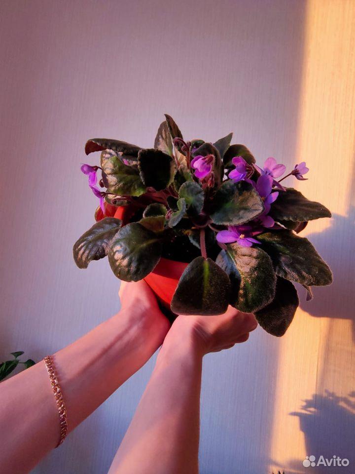 Цветы  89176088037 купить 3