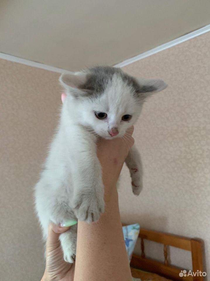 Котята в добрые руки бесплатно  89876955069 купить 6