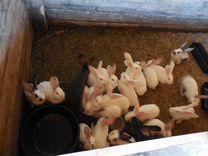 Кролики кролико-ферма
