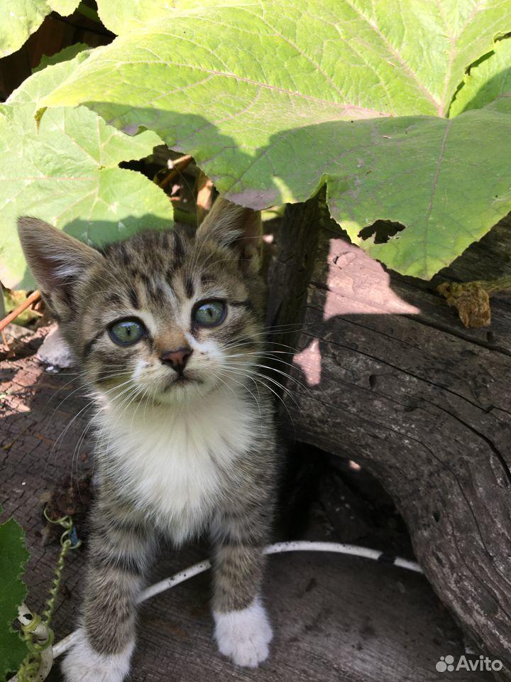 Отдам котят в добрые руки  89096353184 купить 3
