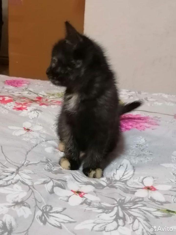 Кошка-малышка  89107565610 купить 2